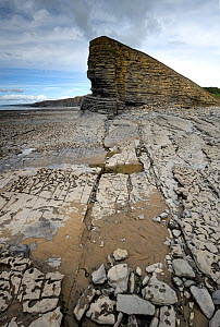 Minor normal or extensional faults exposed in the cliffs and also on the shore wave-cut platform. Nash Point, South Glamorgan Heritage Coast, Llantwit Major, Wales, UK. September 2017. The cliffs comp... - Graham Eaton