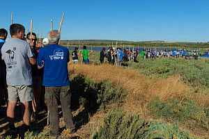 Volunteers standing in a line, waiting to ring Greater flamingo (Phoenicopterus ruber) juveniles, Fuente de Piedra lagoon, Malaga, Spain. August.  -  Francisco Marquez
