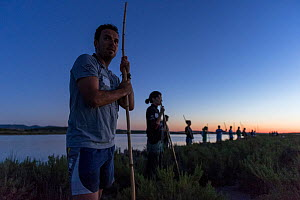 Volunteers standing in a line, holding sticks, watching Greater flamingo (Phoenicopterus ruber) flock flying, Fuente de Piedra lagoon, Malaga, Spain. August. - Francisco Marquez
