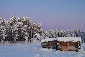 Eagle watching hide with forest beyond, snow covered. Ecotourism site ,Kalvtrask, Vasterbotten, Lapland, Sweden. January.  -  Staffan Widstrand
