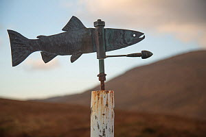 Weather vane in the shape of an Atlantic Salmon (Salmo salar), Eishken Sporting Estate, Isle of Lewis, Outer Hebrides, Scotland, UK, December 2017. - SCOTLAND: The Big Picture