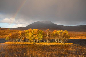 Rainbow over forested island in front of Canisp, Loch Awe, Assynt, Scotland, UK, November 2016.  -  SCOTLAND: The Big Picture
