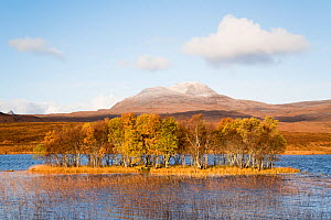 Forested island in front of Canisp, Loch Awe, Assynt, Scotland, UK, November 2016.  -  SCOTLAND: The Big Picture
