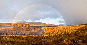 Double rainbow emmerging from rain shower over Loch Awe, Assynt, Scotland, UK, November 2016.  -  SCOTLAND: The Big Picture