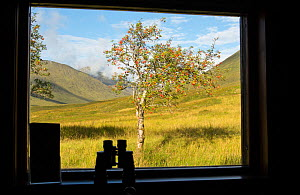 View of Rowan tree (Sorbus aucuparia) through window of youth hostel, with binoculars silhouetted on shelf, Glen Affric, Scotland, UK, August 2016. - SCOTLAND: The Big Picture