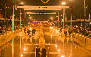 Kambala racing, a buffalo race which takes place on two parallel slushy tracks. Karnataka, India.  -  Yashpal Rathore