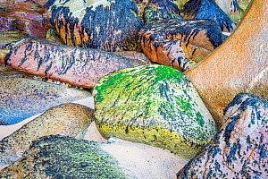 Granite rocks with algae and limpets at the wild Atlantic coast of Brittany near Quiberon, France. August 2017  -  Theo  Bosboom