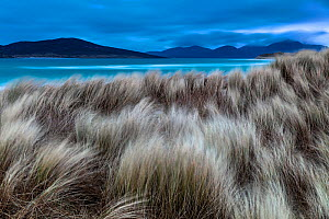 Blue hour before sunrise at the dunes of Seilebost beach, Lewis and Harris, Scotland. February 2018.  -  Theo  Bosboom