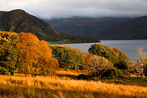 Ennerdale with Ennerdale Lake with low cloud in autumn, site of the Wild Ennerdale project to rewild the area, Cumbria, UK. October 2016. Medium repro only. - David  Woodfall