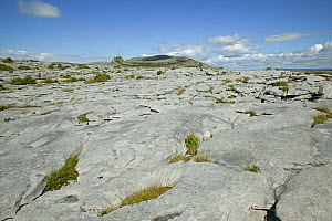 Limestone Pavement, Mullaghmore, Burren National Park, Republic of Ireland. June 2012. - David  Woodfall