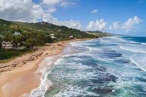 Landscape of beach in Bathsheba area, with views of Scotland District. Barbados, Atlantic Ocean. Drone photo.  -  Derek Galon