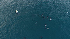 Aerial shot of a large pod of Killer whales (Orcinus orca) swimming close to a tourist boat, Troms, Norway, January.  -  Espen Bergersen