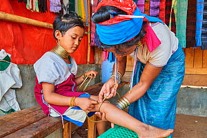 Kayan Lahwi woman putting a brass coil on the lower leg of her daughter. The Long Neck Kayan (also called Padaung in Burmese) are a sub-group of the Karen ethnic people from Burma. Women wear spiral c...  -  Eric Baccega