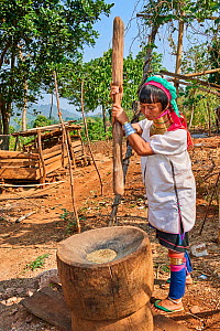 Kayan Lahwi woman with brass neck coils and traditional clothing pounding rice in a wooden mortar. The Long Neck Kayan (also called Padaung in Burmese) are a sub-group of the Karen ethnic people from...  -  Eric Baccega