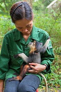 Bui Thi Hanh, Animal Caretaker, holding infant Red-shanked douc langur (Pygathrix nemaeus) that was rescued from illegal wildlife trade, Endangered Primate Rescue Center, Cuc Phuong National Park, Vie...  -  Suzi Eszterhas