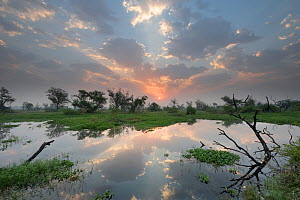Sunrise over wetlands in , Keoladeo NP, Bharatpur, India  -  Bernard Castelein