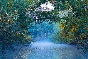Mist on a shallow channel, Danube Delta UNESCO World Heritage Site, Tulcea County, Romania, October.  -  Juan  Carlos Munoz