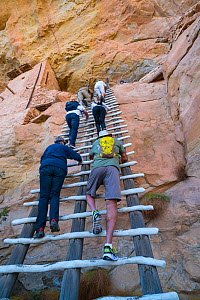 People climbing up ladder at Balcony House, Mesa Verde National Park UNESCO World Heritage Site, Colorado, USA. October.  -  Juan  Carlos Munoz