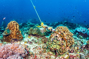 Boat anchor digs into a coral reef in The Philippines. - Shane Gross