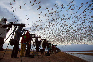 Bird photographers line up at sunrise to photograph mass takeoffs of overwintering Snow geese (Chen caerulescens), Bosque Del Apache National Wildlife Refuge, New Mexico, USA. December 2017.  -  Marie  Read