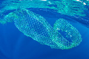 Floating, abandoned net in the ocean, Dominica, Caribbean Sea, Atlantic Ocean.  -  Franco  Banfi