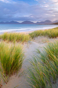 Sand dunes, marram grass (Ammophila arenaria) and beach at sunrise, Luskentyre, Isle of Harris, Scotland, UK. October 2018  -  Ross Hoddinott