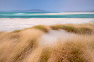 RF - Sand dunes with Marram grass (Ammophila arenaria) and beach at Seilebost beach, Isle of Harris, Scotland, UK. October (This image may be licensed either as rights managed or royalty free.) - Ross Hoddinott