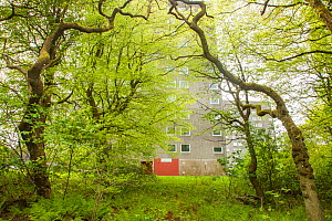 Woodland in spring with residential flat in background, Cumbernauld, Glasgow, Scotland, UK.May - SCOTLAND: The Big Picture