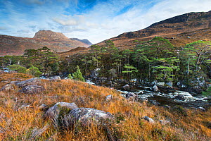 Remnant pines in wooded ravine and view to Slioch, Torridon, Scotland, UK. November. - SCOTLAND: The Big Picture
