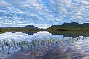 Coigach hills (Cul Mor and Cul Beag) reflected in loch at dawn, Coigach and Assynt Living Landscape, Scotland, UK.July  -  SCOTLAND: The Big Picture