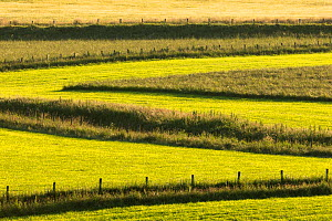 Field of grass partially mown for the production of sileage leaving uncut strips and field margins, providing habitat for insects and other wildlife, Cairngorms National Park, Scotland, UK, July.  -  SCOTLAND: The Big Picture
