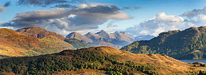 Partially wooded uplands with Five Sisters of Kintail in background, Northwest Highlands, Scotland, UK.September  -  SCOTLAND: The Big Picture