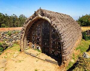 Dogle / hut of the Toda tribe, with thatched roof. Nilgiri Mountains, Tamil Nadu, India. 2014. - Tony Heald