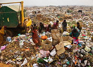 People picking through rubbish on landfill site, residents of the site. Guwahati, Assam, India. 2009.  -  Tony Heald