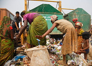 People picking through rubbish from newly arrived skips, on landfill site. Guwahati, Assam, India. 2009.  -  Tony Heald