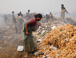 Woman sorting through rubbish on landfill site, many other people in background. Guwahati, Assam, India. 2009.  -  Tony Heald