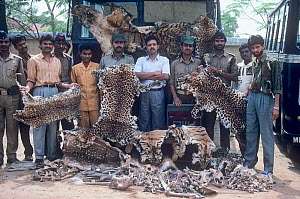 Indian police with a haul of Tiger, Leopard and Deer skins and bones confiscated from pouchers near Kanha National Park, Central India. 1989. - Jiri Lochman