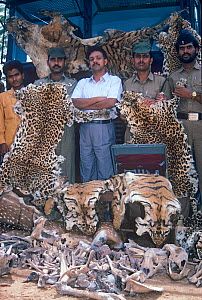 Indian policeman with a haul of Tiger, Leopard and Deer skins and bones confiscated from poachers near Kanha National Park, Central India. 1989. - Jiri Lochman