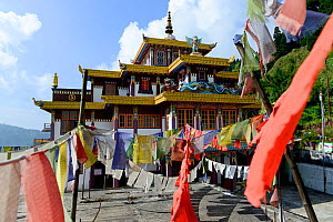 Mag-Dhog Yolmowa Monastery, Darjeeling, surrounded by buddhist prayer flags. West Bengal, India, October.  -  Enrique Lopez-Tapia