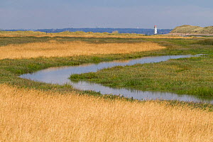 Salt marsh channel at high tide with Talacre lighthouse in the background. Gronant Local Reserve, Denbighshire, Wales, UK, July 2018. - David  Woodfall