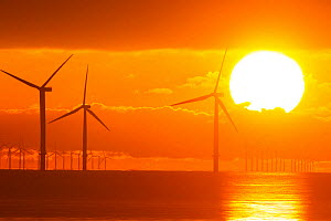 Sunrise over offshore wind turbine farm, Essex, England, UK, December.  -  David  Woodfall