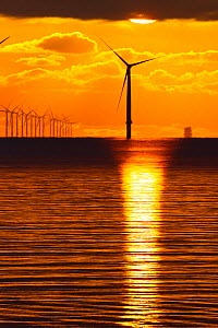 Dawn over offshore wind turbine farm, Essex, England, UK, December. - David  Woodfall