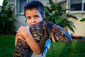 Five year old boy holding his pet Argentine black and white tegu (Salvator merianae) 'Rock' on his shoulder. Rock was wild caught as a yearling in Florida, however this species is invasive in... - Karine Aigner