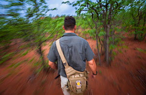 Researcher Francois Meyer tracking an adult Temminck's ground pangolin (Smutsia temminckii) that had been released back into the wild following its rehabilitation and rescue from poachers in Limpo... - Neil Aldridge