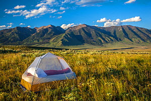 Tent pitched near Hilgard Peak, Beaverhead National Forest, Montana, USA, July 2011. - Phil Savoie