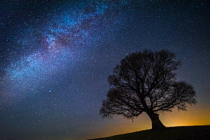 Milky Way in night sky with silhouette of tree, Brecon Beacons National Park,an International Dark Sky Preserve, Wales, UK. December 2016. - Phil Savoie