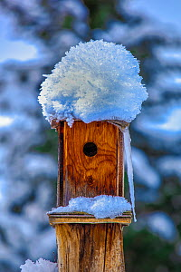Bird box covered in snow, Montana, USA, December.  -  Phil Savoie