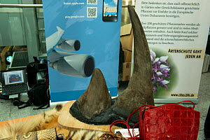 Confiscated Rhino horn, German Federal Nature Conservation Agency (BfN), with a display of other CITES protected wildlife products at Düsseldorf Airport, Germany. 26th June 2015 - Will Watson