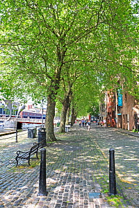 Avenue of London Plane Trees (Platanus x hispanica) Bristol Docks, Bristol UK May 2019  -  Ben Gillett