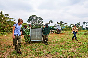 Transfer of Western lowland gorilla (Gorilla gorilla gorilla) cage from helicopter to boat for onward travel to habituation island. Reintroduction from Beauval Zoo through Gorilla Protection Project.... - Eric Baccega